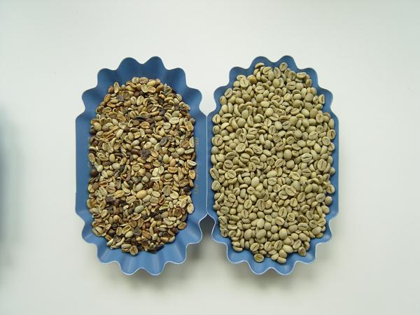 Arabica-Robusta-Rohkaffee-Blaser-MCC_600